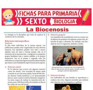 Ficha de La Biocenosis para Sexto Grado de Primaria