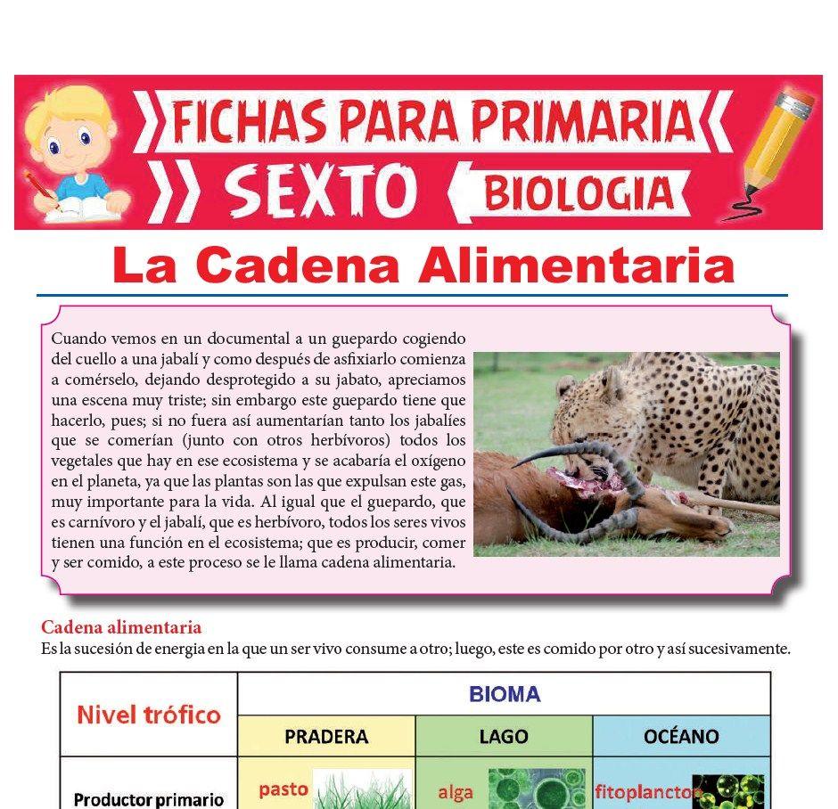 Ficha de La Cadena Alimentaria para Sexto Grado de Primaria