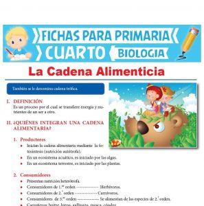 Ficha de La Cadena Alimenticia para Cuarto Grado de Primaria