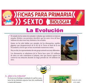 Ficha de La Evolución para Sexto Grado de Primaria