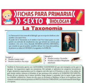 Ficha de La Taxonomía para Sexto Grado de Primaria