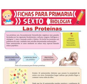 Ficha de Las Proteínas para Sexto Grado de Primaria