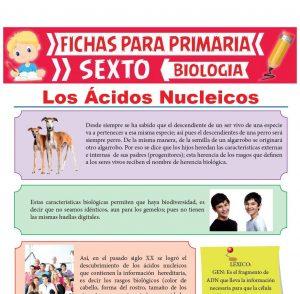 Ficha de Los Ácidos Nucleicos para Sexto Grado de Primaria