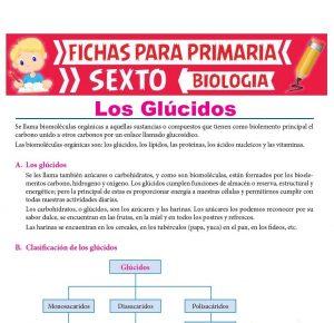 Ficha de Los Glúcidos para Sexto Grado de Primaria