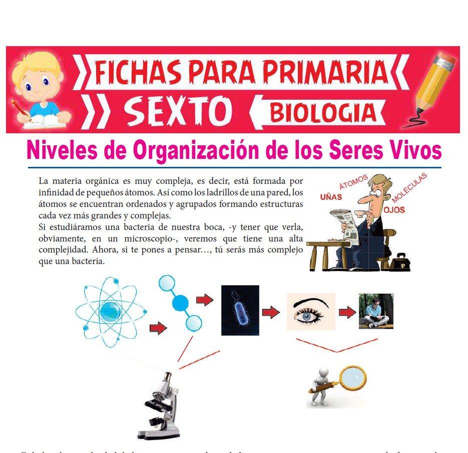 Ficha de Niveles de Organización de los Seres Vivos para Sexto Grado de Primaria