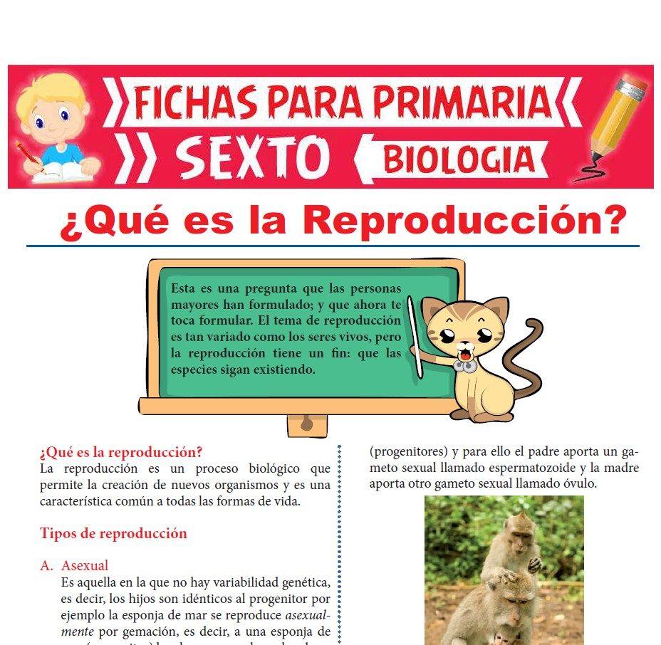 Ficha de Qué es la Reproducción para Sexto Grado de Primaria
