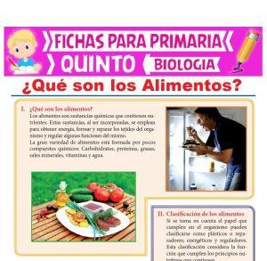 Ficha de Qué son los Alimentos para Quinto Grado de Primaria