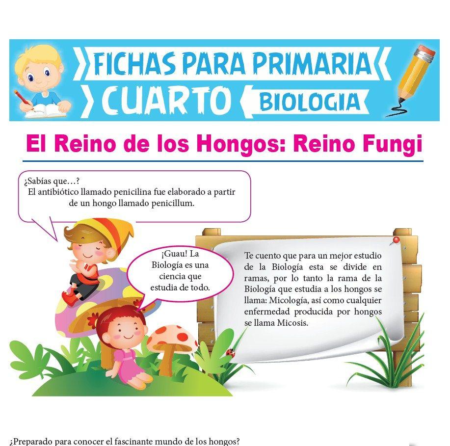 Ficha de Reino Fungi para Cuarto Grado de Primaria
