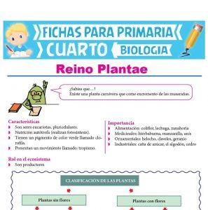 Ficha de Reino Plantae para Cuarto Grado de Primaria