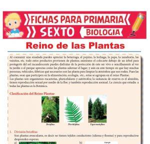 Ficha de Reino de las Plantas para Sexto Grado de Primaria