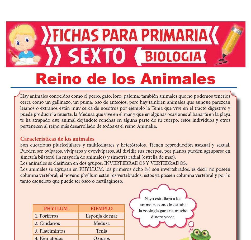Ficha de Reino de los Animales para Sexto Grado de Primaria