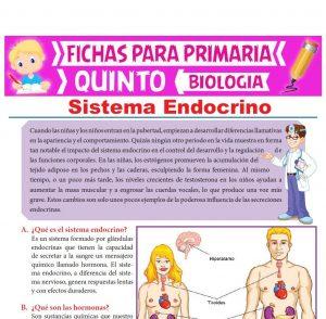 Ficha de Sistema Endocrino para Quinto Grado de Primaria