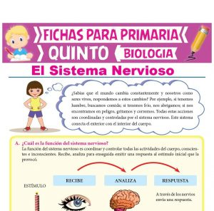 Ficha de Sistema Nervioso para Quinto Grado de Primaria