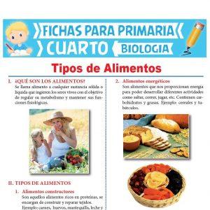 Ficha de Tipos de Alimentos para Cuarto Grado de Primaria