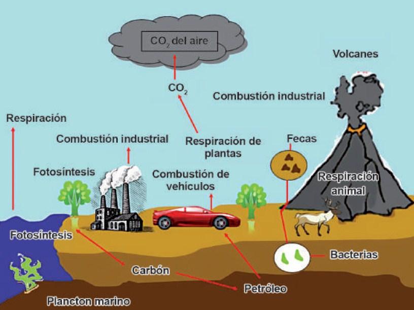 Ficha de ciclo del carbon para primaria