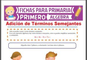 Ficha de Adición de Términos Semejantes para Primer Grado de Primaria