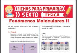 Ficha de Fenómenos Moleculares 2 para Sexto Grado de Primaria