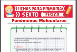 Ficha de Fenómenos Moleculares para Sexto Grado de Primaria