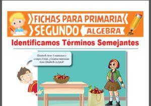 Ficha de Identificamos Términos Semejantes para Segundo Grado de Primaria