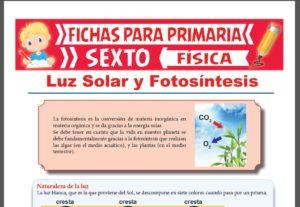 Ficha de La Luz Solar y la Fotosíntesis para Sexto Grado de Primaria