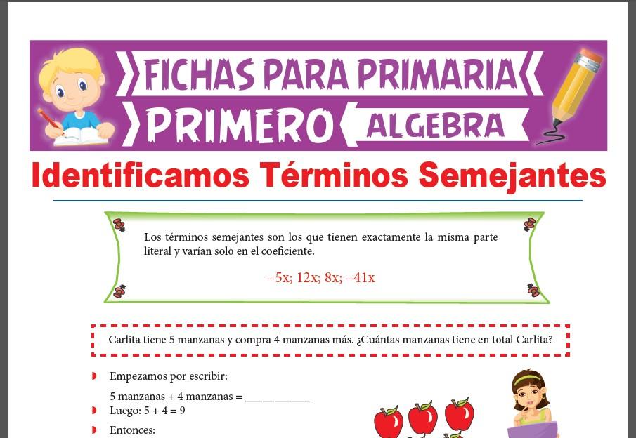 Ficha de Que son los Términos Semejantes para Primer Grado de Primaria