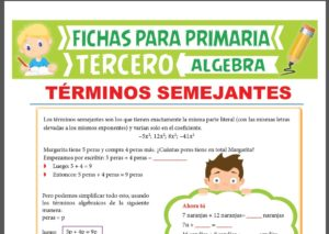 Ficha de Términos Semejantes de Segundo y Tercer Grado para Tercer Grado de Primaria