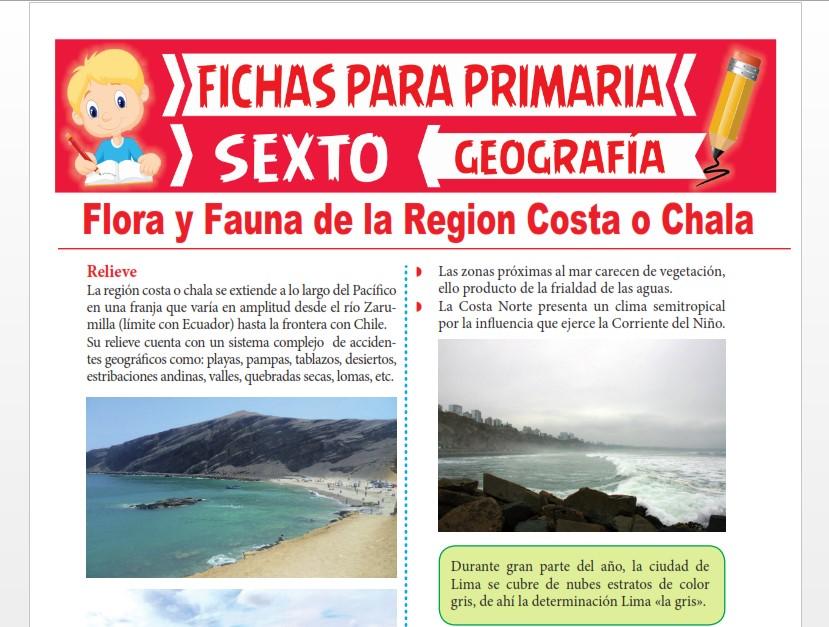 Ficha de Flora y Fauna de la Región Costa o Chala para Sexto Grado de Primaria
