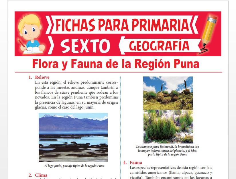 Ficha de Flora y Fauna de la Región Puna para Sexto Grado de Primaria