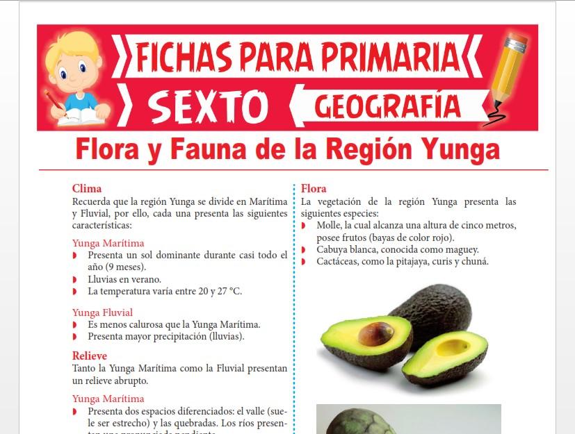Ficha de Flora y Fauna de la Región Yunga para Sexto Grado de Primaria