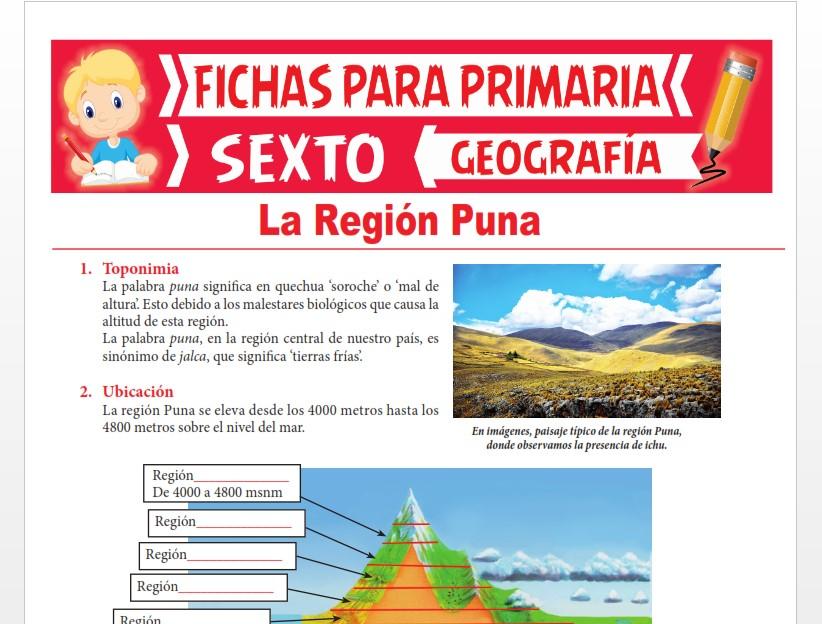 Ficha de La Región Puna para Sexto Grado de Primaria