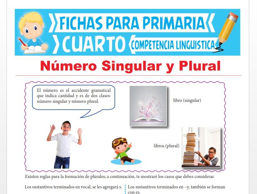 Ficha de Número Singular y Plural para Cuarto Grado de Primaria