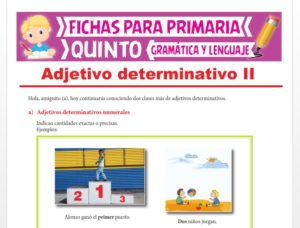 Ficha de Adjetivos Determinativos Numerales e Indefinidos para Quinto Grado de Primaria