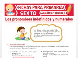Ficha de Pronombres Indefinidos y Numerales para Sexto Grado de Primaria